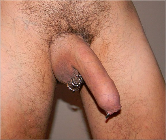 foreskin restoring erection 2
